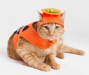cat in a pumpkin costume